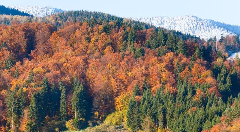 De bergbos van de herfst stock foto's