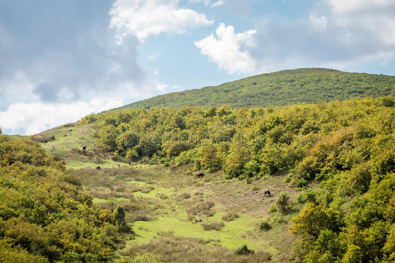 De bergen groen gras van de zomer en blauw hemellandschap stock afbeelding