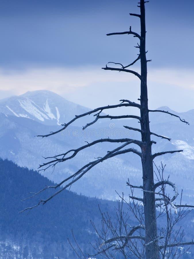 De Bergen van Adirondack in de Winter royalty-vrije stock foto