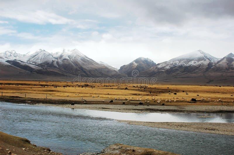 De bergen van de sneeuw en een rivier in Tibet royalty-vrije stock foto's