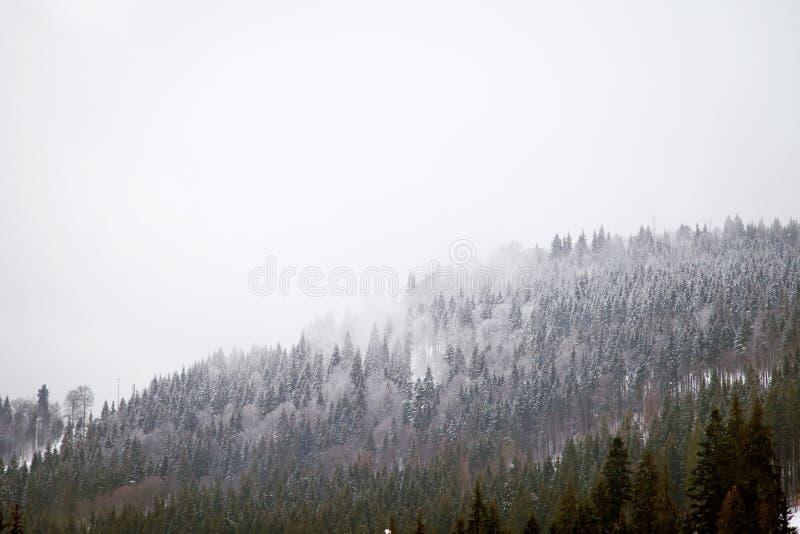 De bergen van de winter De heuvels van de Karpaten royalty-vrije stock foto's