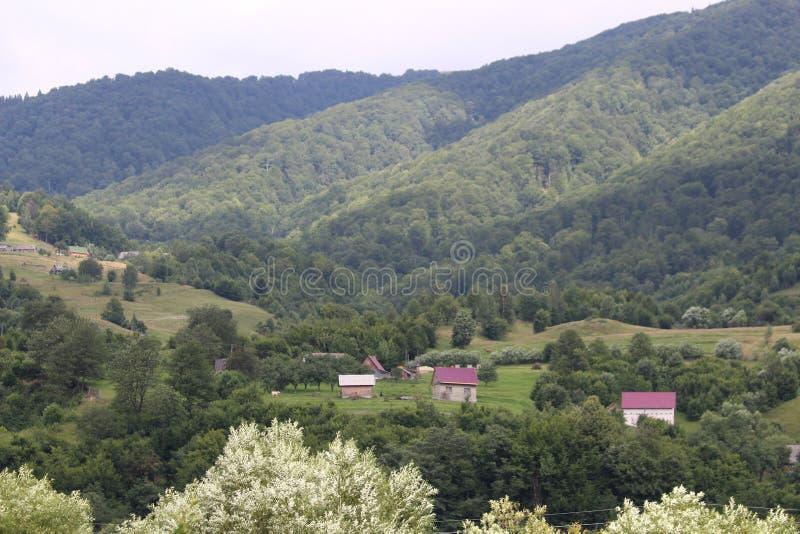 De bergen van de Karpaten zijn niet zo hoog maar zeer majestueus, en het water is het leven in deze bergen stock foto's