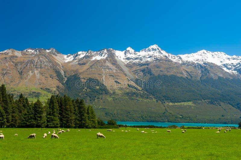 De bergen van Nieuw Zeeland stock afbeelding