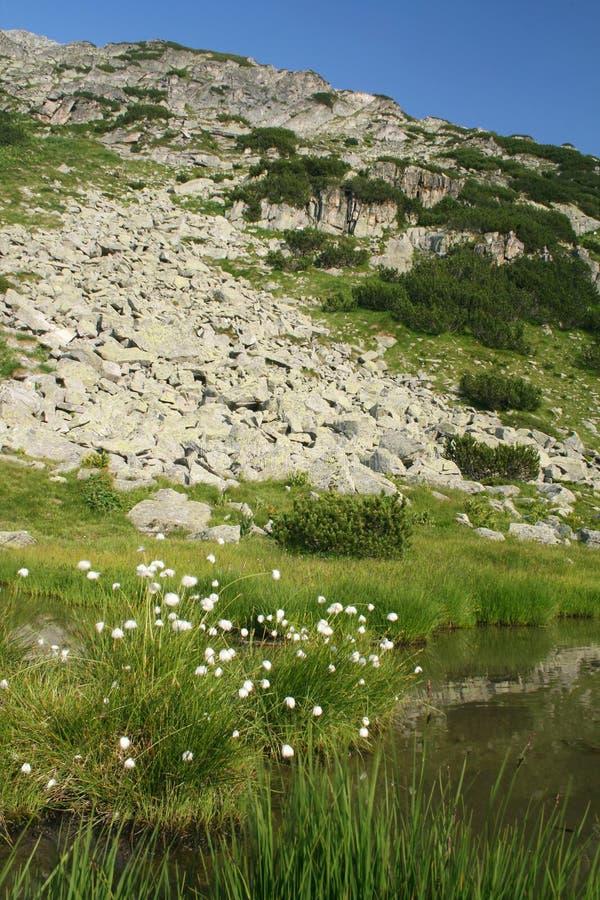 De bergen van Rila in Bulgarije stock afbeelding