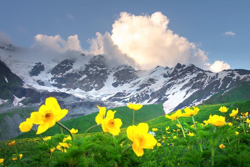 De Bergen van de zomer Gele bloemen in groene bergvallei Alpiene Bergketen Mooie mening over sneeuw rotsachtige bergen royalty-vrije stock foto