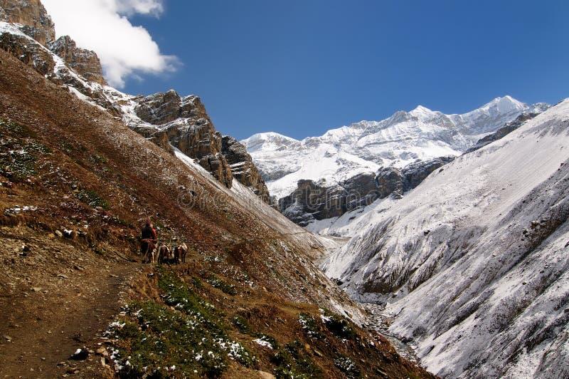 De bergentrek van Nepal Himalayagebergte portier stock afbeeldingen