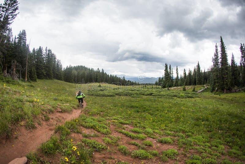 De bergfietser berijdt onderaan enkelsporige sleep royalty-vrije stock afbeeldingen