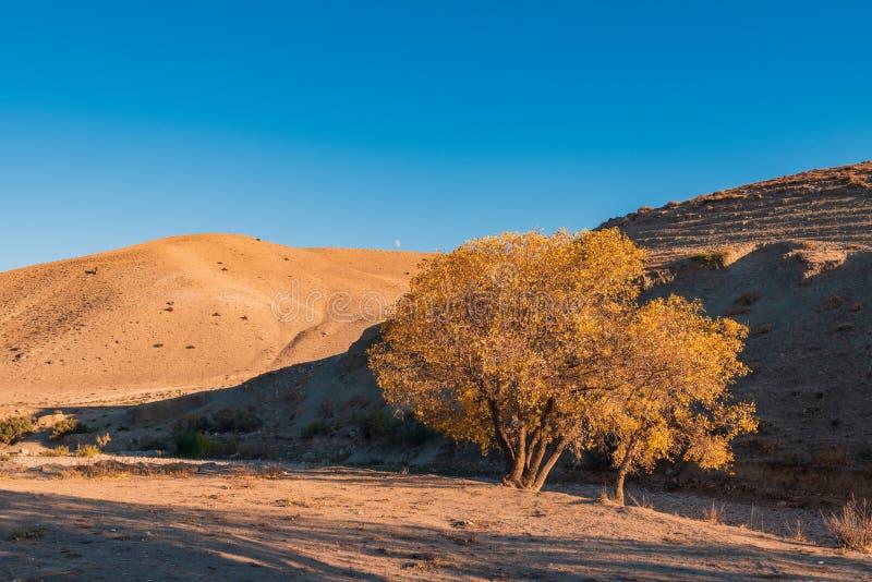 De berglandschap van de herfst Nationale reserve Karadag royalty-vrije stock fotografie