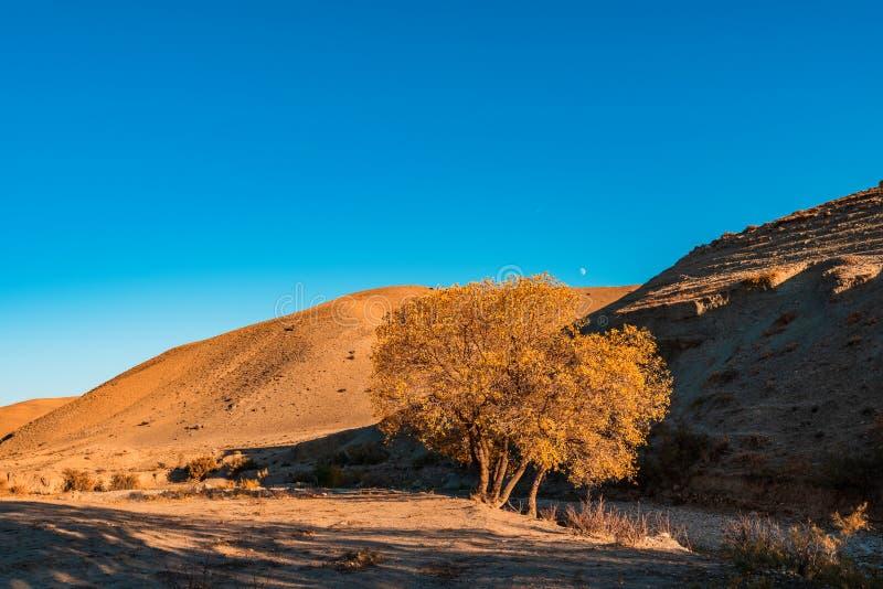 De berglandschap van de herfst Nationale reserve Karadag royalty-vrije stock foto's