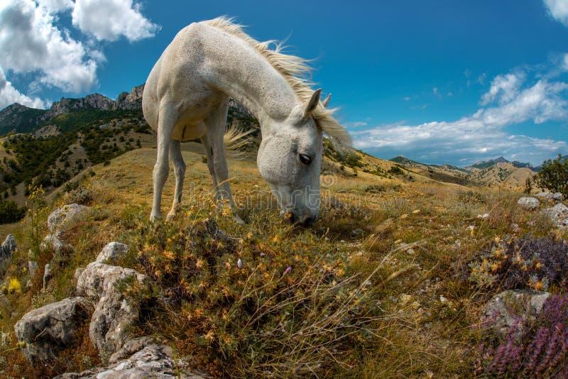 De berglandschap van de schoonheidsaard met wit paard royalty-vrije stock foto's