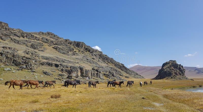 De bergmeer van bergaltai stock fotografie