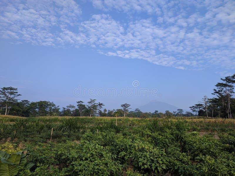 De Bergmening van Chili Garden en Merapi- royalty-vrije stock foto
