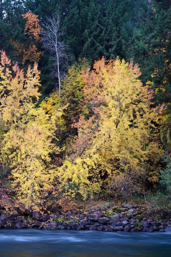 De Berk van de herfst royalty-vrije stock foto