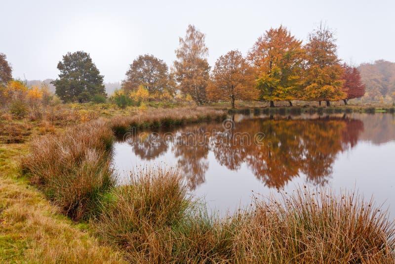 De berkbomen van de herfst stock fotografie