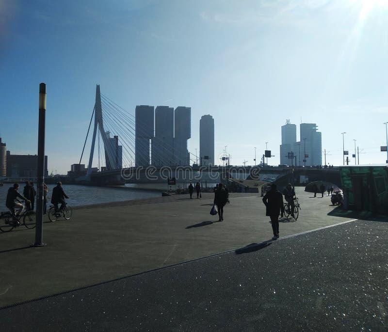 De beroemde Erasmus brug van Rotterdam in Nederland en de omringende moderne gebouwen op een mooie zonnige dag royalty-vrije stock fotografie