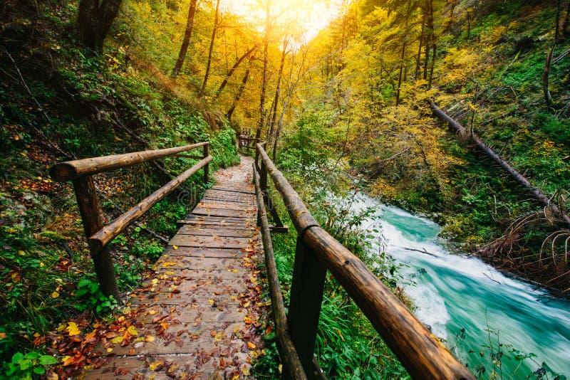 De beroemde Vintgar-Afgetapte Canion met houten klopjes, Triglav, Slovenië, Europa stock foto