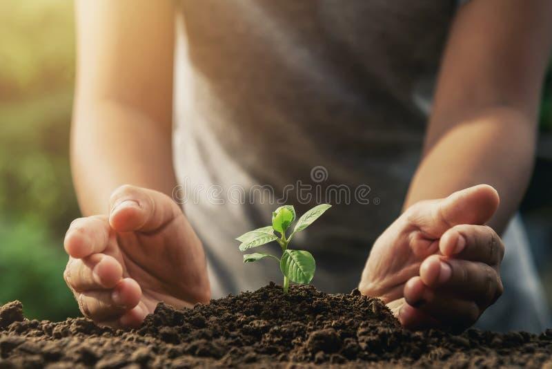 de bescherming van de handlandbouwer van kleine boom op grond en zonneschijn in stock fotografie