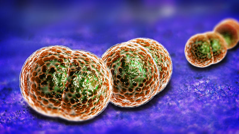 De Besmetting van meningitisbacteriën stock illustratie
