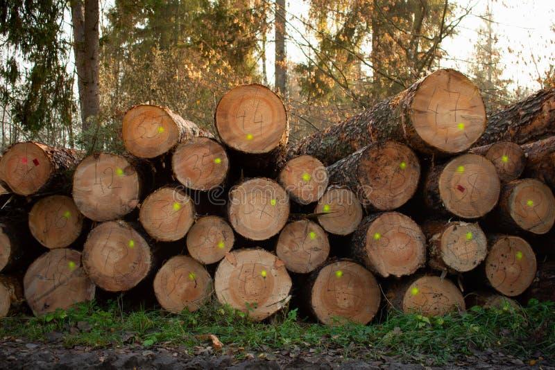 De besnoeiing opent het hout het programma Industriële voorbereiding van bosproducten royalty-vrije stock foto