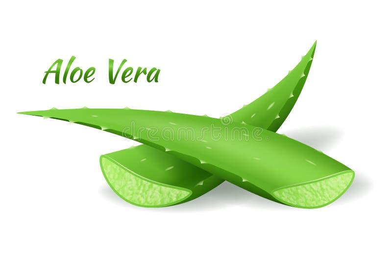 De besnoeiing van aloëvera doorbladert, realistische groene installatie, twee aloëbladeren of sneed stukken die op wit worden geï vector illustratie