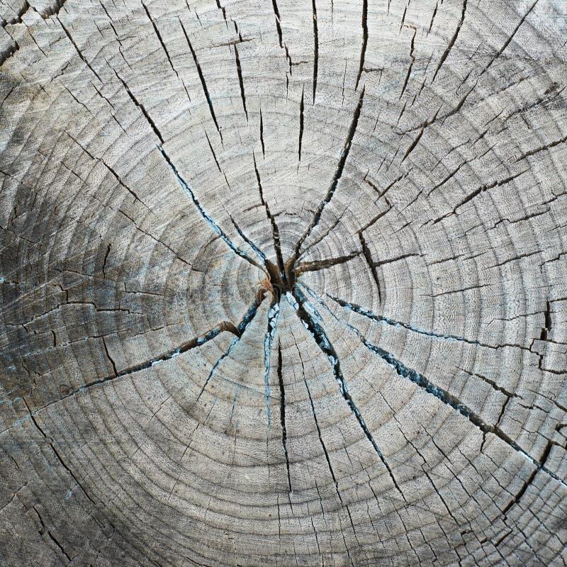 De besnoeiing van de oude en droge boom stock afbeelding