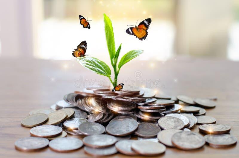 De Besparingsgeld van de geldgroei Het hogere getoonde concept van boommuntstukken het kweken van zaken stock foto's