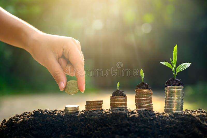 De Besparingsgeld van de geldgroei Het hogere getoonde concept van boommuntstukken het kweken van zaken stock afbeeldingen