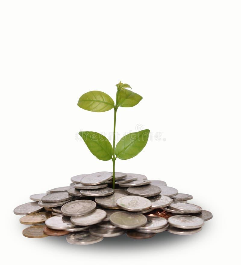 De Besparingsgeld van de geldgroei Het hogere getoonde concept van boommuntstukken het kweken van zaken royalty-vrije stock foto