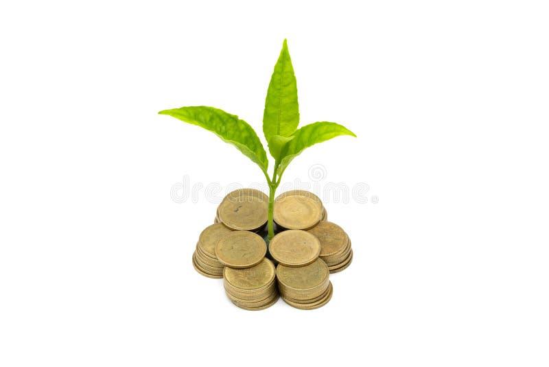 De Besparingsgeld van de geldgroei Het hogere getoonde die concept van boommuntstukken het kweken van zaken op witte achtergrond, stock foto