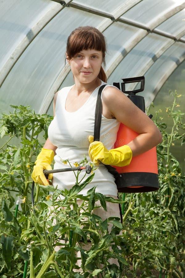 De bespuitende tomatenplant van de vrouw royalty-vrije stock foto