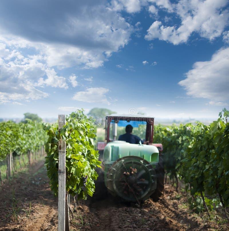 De bespuitende wijngaarden van de tractor met chemische producten stock afbeeldingen