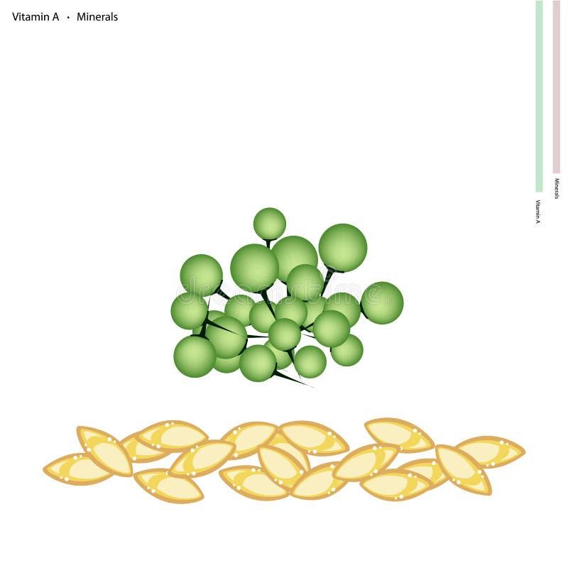 De Bessen van Turkije met Vitamine A en Mineralen royalty-vrije illustratie