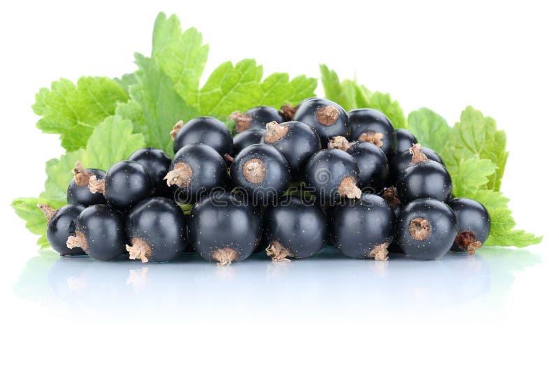 De bessen verse die vruchten van zwarte besbessen fruit op wh wordt geïsoleerd royalty-vrije stock fotografie
