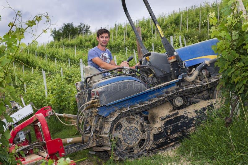 De bestuurder op de gevolgde tractorwerken onder de rijen van wijngaarden in de heuvels van Langhe en Roero-in Piemonte de hemel  stock foto's