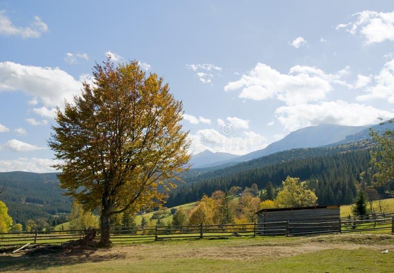 De beuk-boom van de herfst stock afbeeldingen