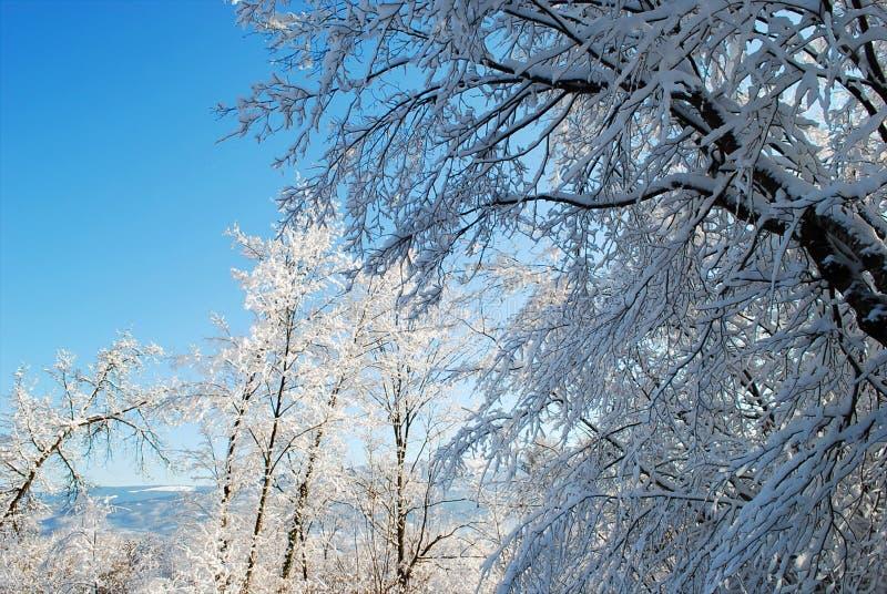De bevroren takken van de bomen na de grote koude van de nacht stock foto's