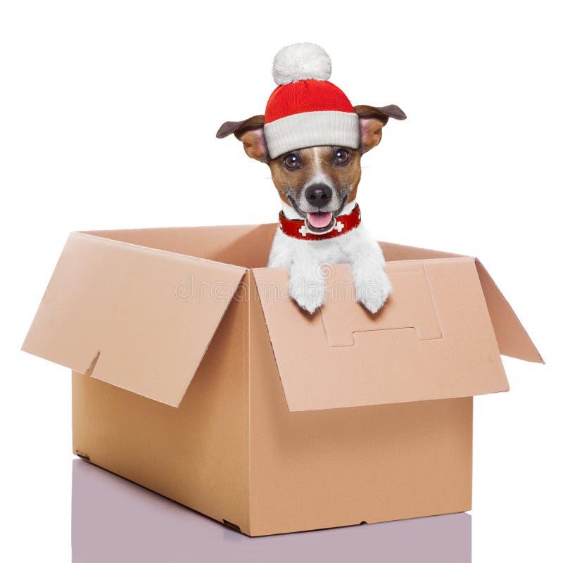 De bewegende hond van de dooswinter royalty-vrije stock afbeelding