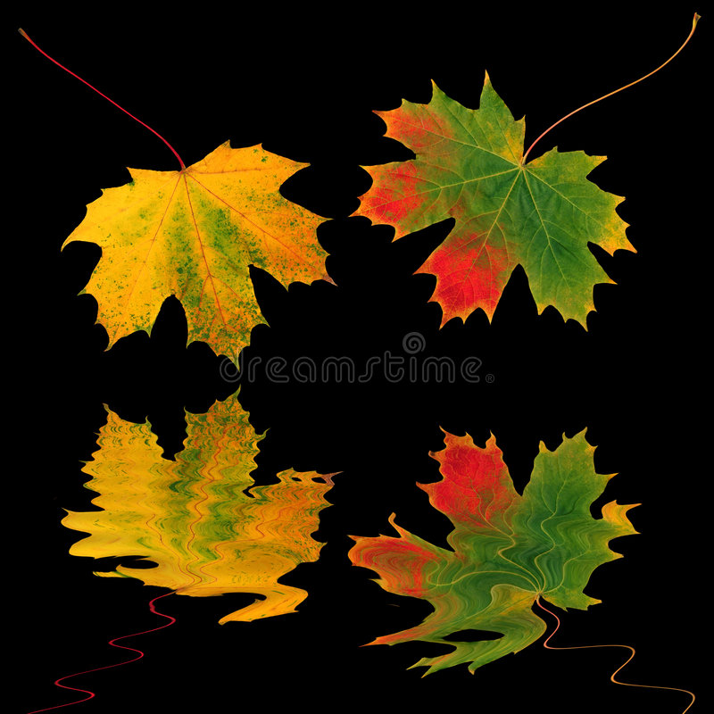 De Beweging van het Blad van de herfst stock illustratie