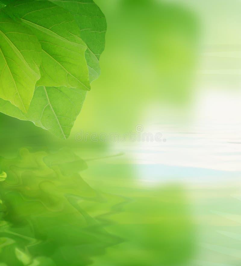 Download De bezinning van bladeren stock foto. Afbeelding bestaande uit bezinning - 17681572