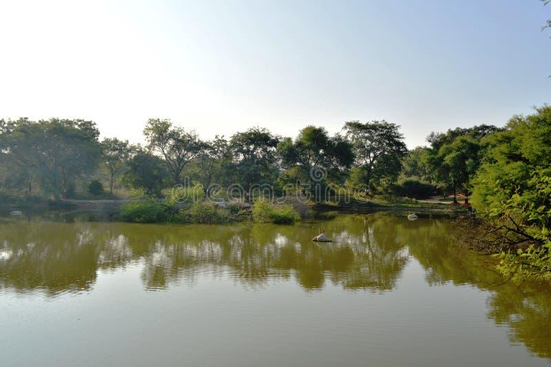 De bezinning van bomen in water royalty-vrije stock foto