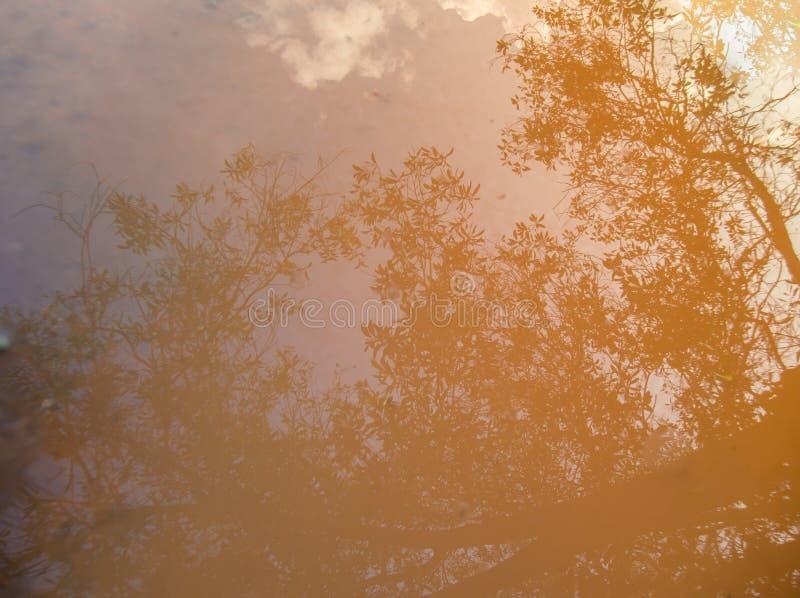 De bezinning van boomschaduw in water stock afbeelding
