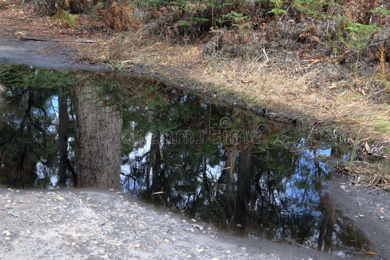 De bezinning van de boomspiegel in een ondiepe vulklei in ver Tasmanige royalty-vrije stock foto