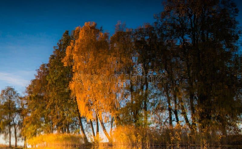 De bezinning van dalingsbomen in water royalty-vrije stock fotografie