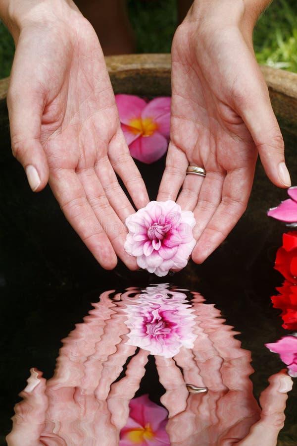 De Bezinning van de Hand van de bloem stock foto