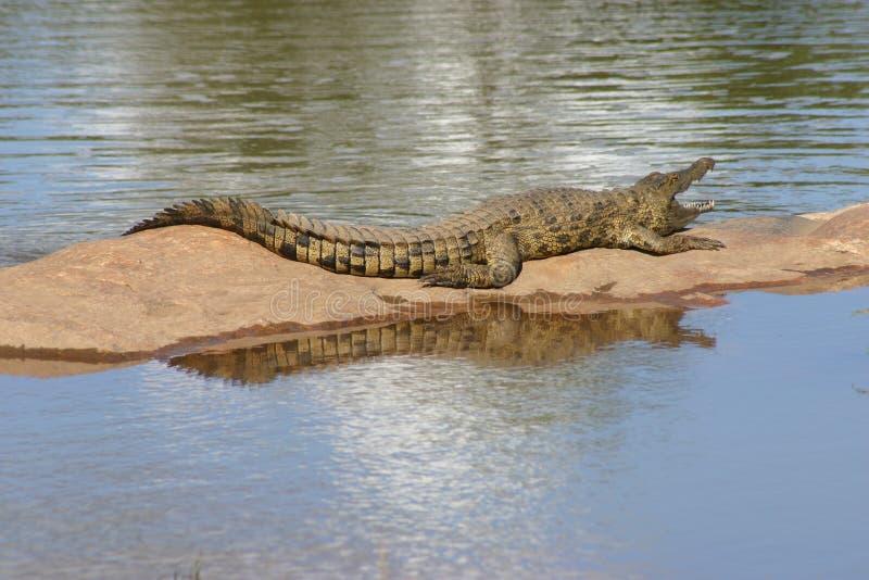 De bezinning van de krokodil stock afbeelding