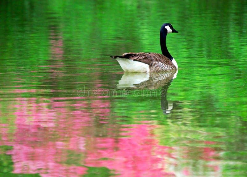 De bezinning van de lente royalty-vrije stock afbeeldingen