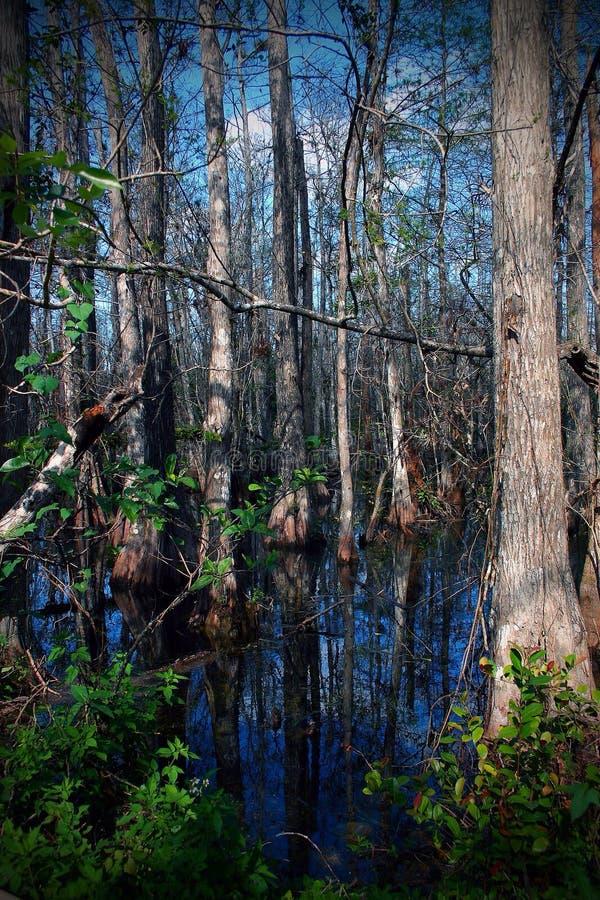 De bezinning van het bomenwater royalty-vrije stock foto's