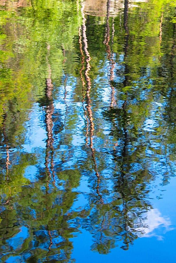 De bezinning van het bomenwater stock afbeeldingen