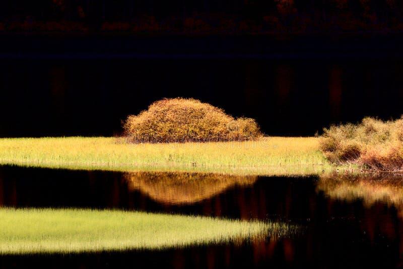 De bezinningen van het water in de herfst royalty-vrije stock afbeeldingen