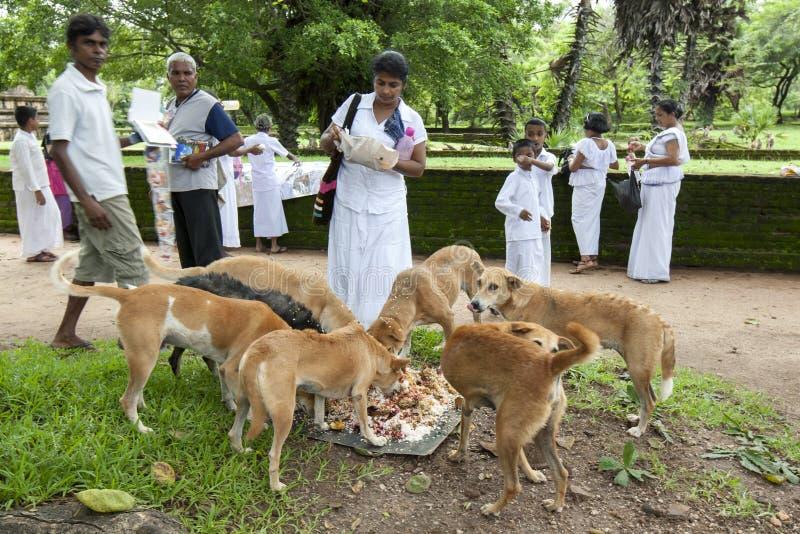 De bezoekers aan oude plaats van Polonnaruwa in Sri Lanka voeden de lokale honden hun linkerzijde over voedsel royalty-vrije stock afbeeldingen